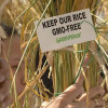 Ivan Karić: Zeleni žele Srbiju bez GMO