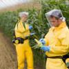 Procurilo: GM kukuruz je jedno veliko otrovno nutritivno ništa