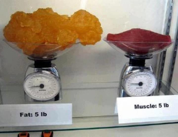 salo-mišić